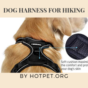 Best Dogs harness For Hiking