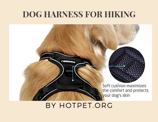 12 Best Dogs Harness for Hiking | Review Guide 2021