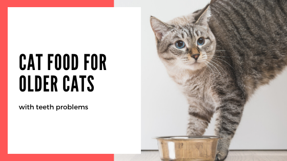8 Best Cat food for older cats with teeth problems – Review Guide 2020