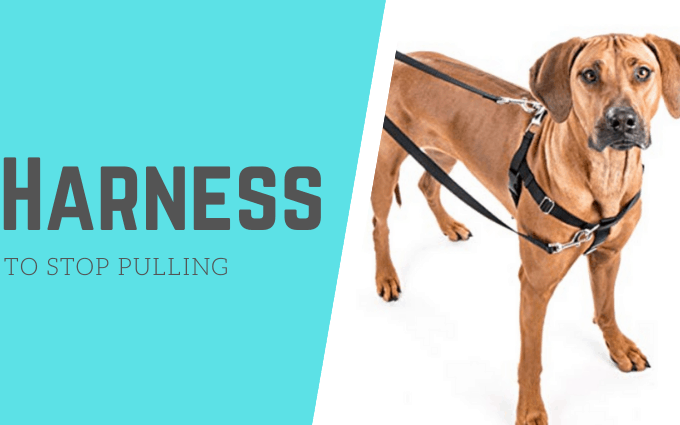 6 Best Harness for Dogs to Stop Pulling – Review Guide 2020