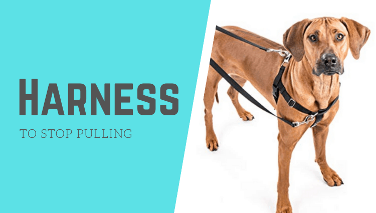 best harness for dogs to stop pulling