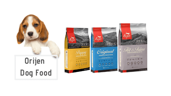6 Best Orijen Dogs Food for Puppies – Review Guide 2020