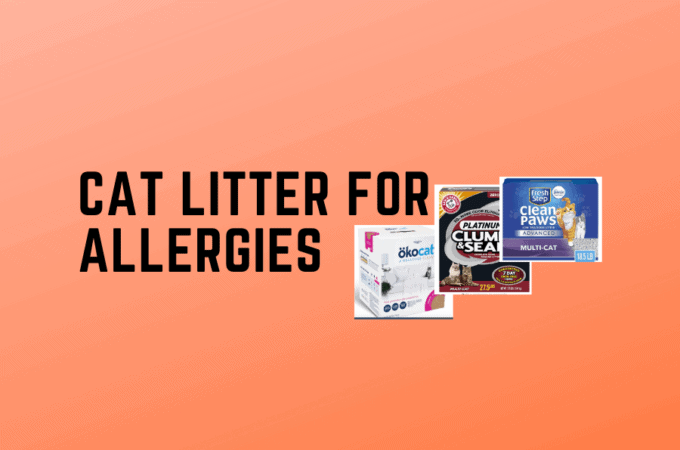 6 Best Cat Litter for Allergies | Review Guide