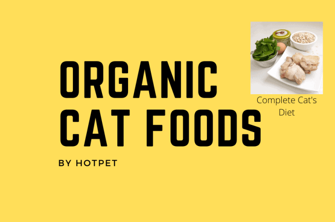 6 Best Organic Food For Cats | Review Guide 2021