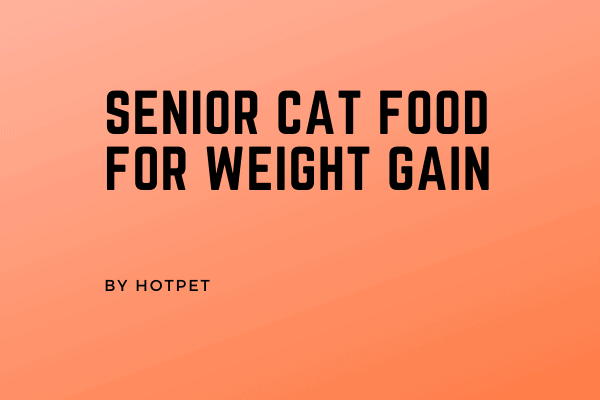 Senior Cat Food for Weight Gain 2