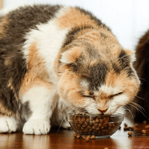 Top rated cat food for senior cats