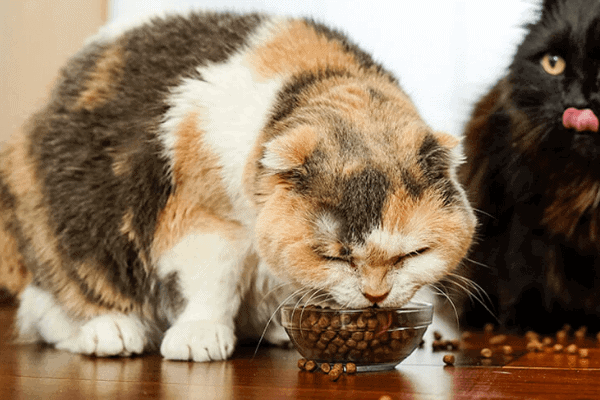 8 Top Rated Senior Wet Cat Foods With Complete Diet | Review Guide 2021